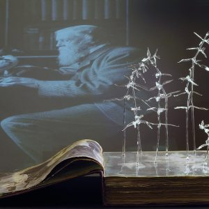 Siobhan Healy, Herbarium, 2011 - Foto Lighthouse Photographics